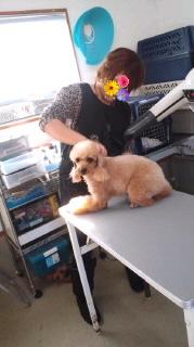 ララ母の犬バカ日記-111129_1446~0100010001.jpg