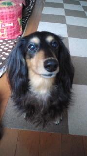 ララ母の犬バカ日記-120101_1311~020001.jpg