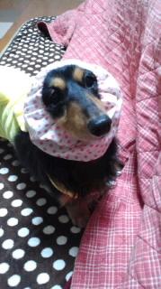 ララ母の犬バカ日記-120103_2029~010001.jpg