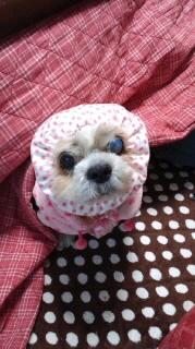 ララ母の犬バカ日記-120106_1725~010001.jpg