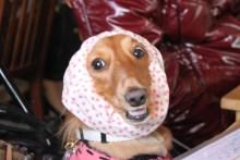 ララ母の犬バカ日記