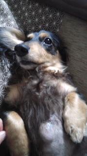 ララ母の犬バカ日記-120116_1821~010001.jpg
