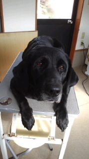 ララ母の犬バカ日記-120118_1336~010001.jpg