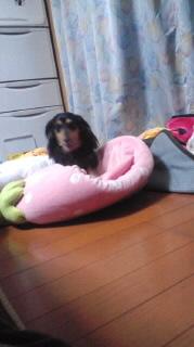 ララ母の犬バカ日記-120118_2001~050001.jpg
