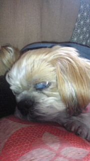 ララ母の犬バカ日記-120118_2004~020001.jpg
