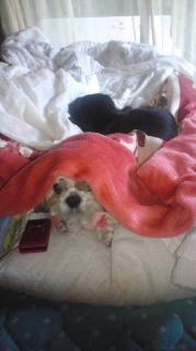 ララ母の犬バカ日記-120119_1324~010001.jpg