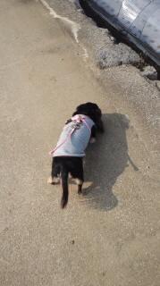 ララ母の犬バカ日記-120127_1348~010001.jpg