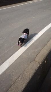 ララ母の犬バカ日記-120127_1348~030001.jpg