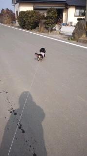 ララ母の犬バカ日記-120127_1350~020001.jpg