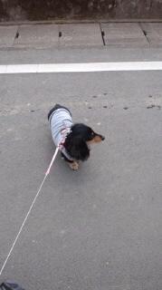 ララ母の犬バカ日記-120127_1353~010001.jpg
