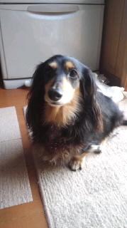 ララ母の犬バカ日記-120202_1552~020001.jpg