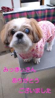 ララ母の犬バカ日記-120206_1554~0100010001.jpg