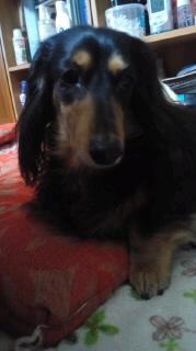 ララ母の犬バカ日記-120206_1658~010001.jpg