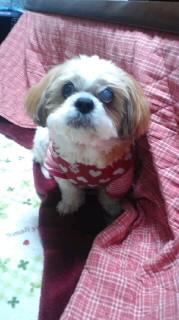 ララ母の犬バカ日記-120209_1903~030001.jpg