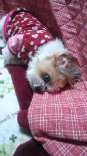 ララ母の犬バカ日記-120209_1906~010001.jpg