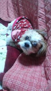ララ母の犬バカ日記-120209_1906~020001.jpg