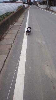 ララ母の犬バカ日記-120216_1650~020001.jpg