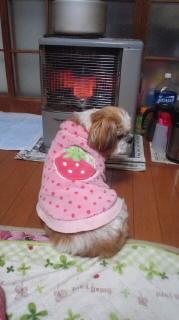 ララ母の犬バカ日記-120217_1843~020001.jpg