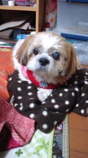 ララ母の犬バカ日記-120218_1805~010001.jpg