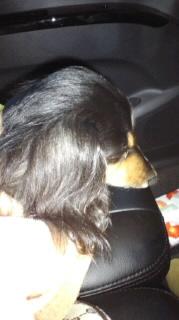ララ母の犬バカ日記-120226_0652~010001.jpg