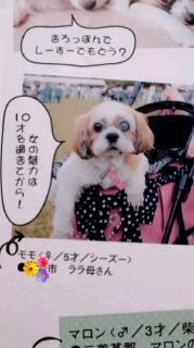 ララ母の犬バカ日記-120229_2032~01000100010001.jpg