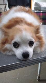 ララ母の犬バカ日記-120306_1253~020001.jpg