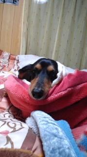 ララ母の犬バカ日記-120308_2227~040001.jpg