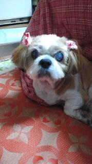 ララ母の犬バカ日記-120311_1910~010001.jpg