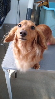 ララ母の犬バカ日記-120313_1445~010001.jpg