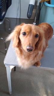 ララ母の犬バカ日記-120313_1445~020001.jpg
