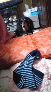 ララ母の犬バカ日記-120315_2010~010001.jpg
