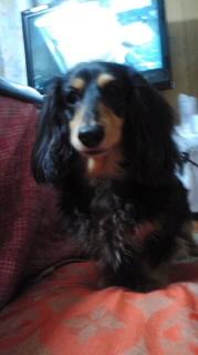 ララ母の犬バカ日記-120315_2011~010001.jpg