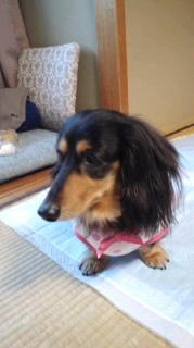 ララ母の犬バカ日記-120322_1610~020001.jpg