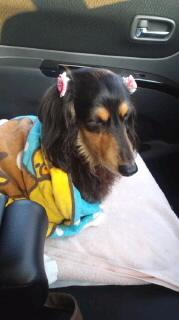 ララ母の犬バカ日記-120325_0647~010001.jpg