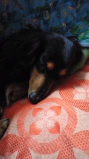 ララ母の犬バカ日記-120327_2029~010001.jpg