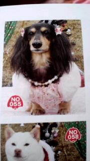 ララ母の犬バカ日記-120329_2112~010001.jpg