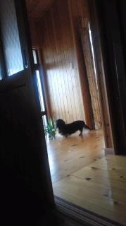 ララ母の犬バカ日記-120403_0737~010001.jpg