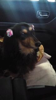 ララ母の犬バカ日記-120408_1750~010001.jpg