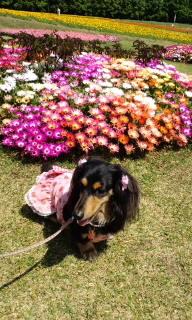 ララ母の犬バカ日記-090510_1030~020001.jpg
