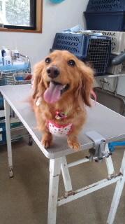 ララ母の犬バカ日記-120410_1344~010001.jpg