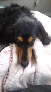 ララ母の犬バカ日記-120411_1706~010001.jpg
