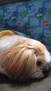 ララ母の犬バカ日記-120413_2121~010001.jpg