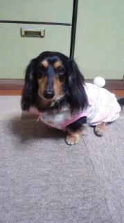 ララ母の犬バカ日記-120423_1927~020001.jpg