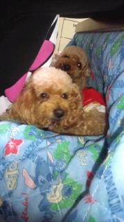 ララ母の犬バカ日記-120423_2013~020001.jpg