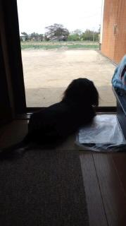 ララ母の犬バカ日記-120424_1459~010001.jpg