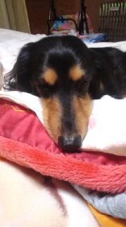 ララ母の犬バカ日記-120424_2108~010001.jpg