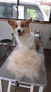 ララ母の犬バカ日記-120426_1245~010001.jpg