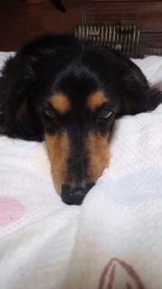 ララ母の犬バカ日記-120507_2103~010001.jpg