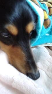 ララ母の犬バカ日記-120519_0709~010001.jpg