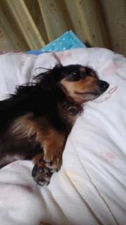 ララ母の犬バカ日記-120528_2151~010001.jpg